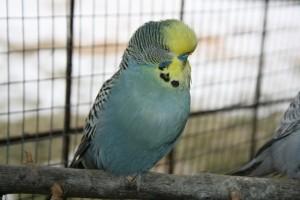 Fugle 009 (640x427)