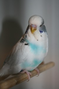 Fugle 10-3-2014 019 (427x640)